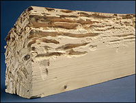 les insectes et champignons du bois documentation gratuite. Black Bedroom Furniture Sets. Home Design Ideas